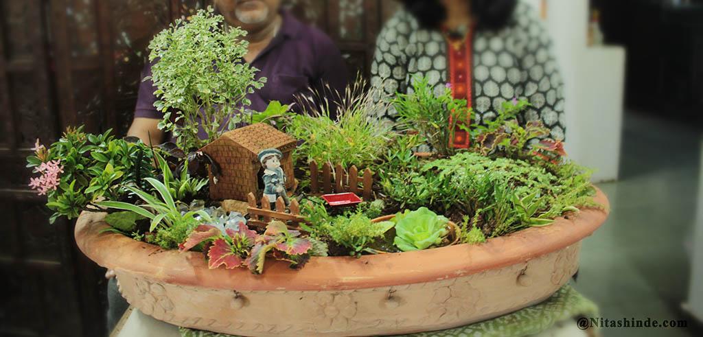 Charmant Dish Gardening. DishGardenLerning_0017